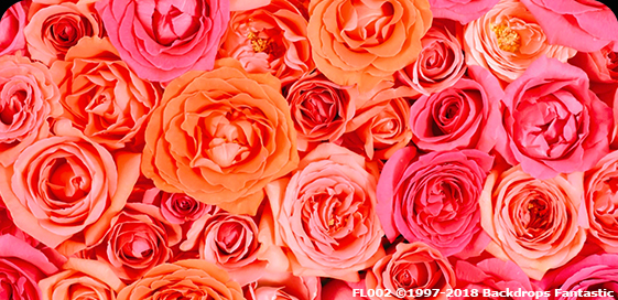 Pink and Peach Floral Backdrops